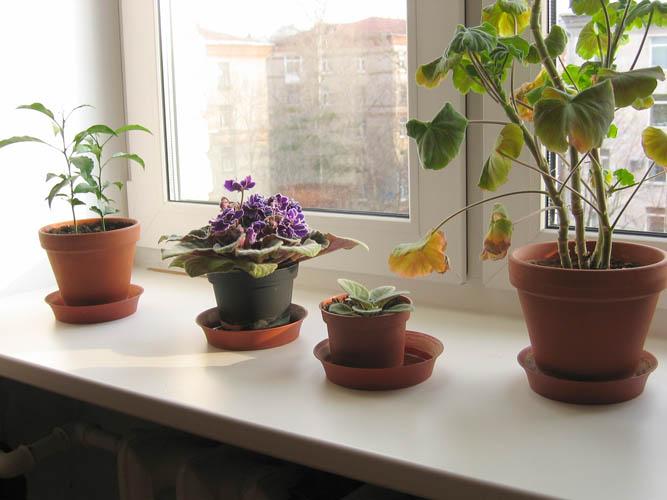 комнатные на картинки окне растения